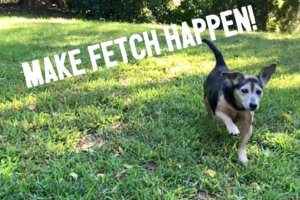 Make Fetch Happen for National Fetch Day!